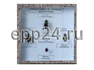 Коллекция Представители отряда насекомых