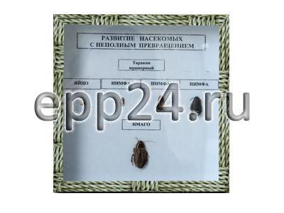Коллекция Развитие насекомых с неполным превращением