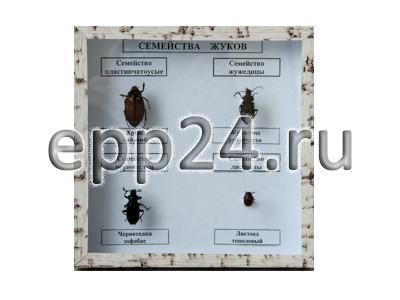 Коллекция Семейство жуков