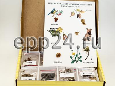 Коллекция Семена и плоды с раздаточным материалом