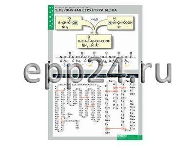Комплект таблиц Белки и нуклеиновые кислоты (8 таблиц)