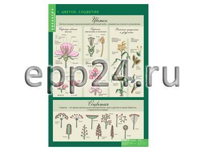 Комплект таблиц Биология 6 класс (14 шт.)