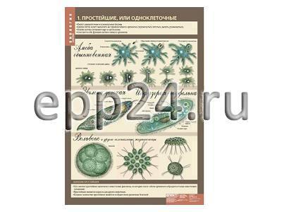 Комплект таблиц Биология 7 класс. Животные (12 шт.)