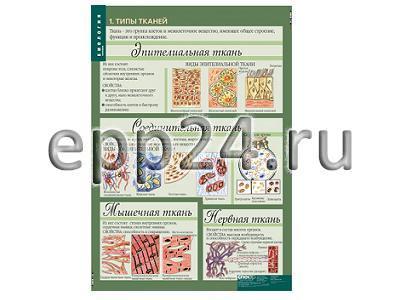 Комплект таблиц Биология. Человек. 8-9 классы (12 шт.)