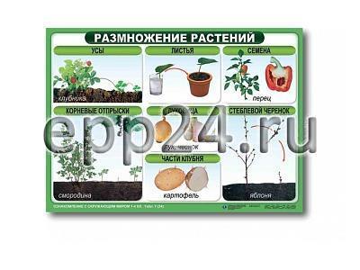 Комплект таблиц Размножение цветковых растений (21 шт.)