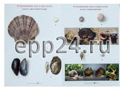 Коллекция Раковины моллюсков