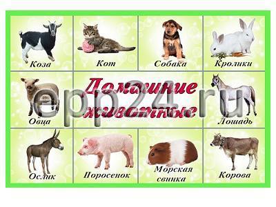 Комплект таблиц Домашние животные (15 шт.)