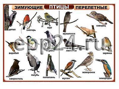 Комплект таблиц Птицы домашние, дикие, декоративные