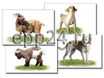 Набор раздаточных карточек Домашние животные