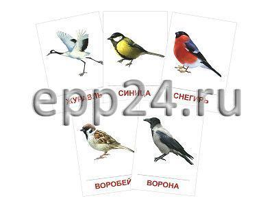 Набор раздаточных карточек Птицы
