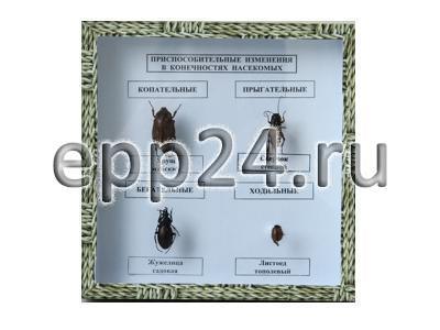Коллекция Приспособительные изменения в конечностях насекомых