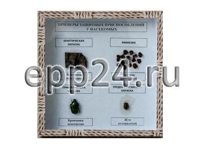 """Коллекция """"Примеры защитных приспособлений у насекомых"""""""
