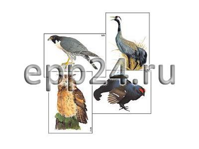 Модель-аппликация Многообразие хордовых. Птицы