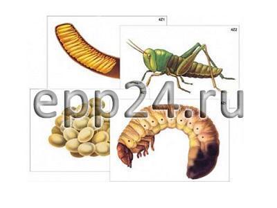 Модель-аппликация Развитие насекомых с полным и не полным превращением