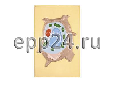Модель барельефная Растительная клетка