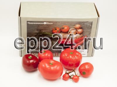 Набор муляжей Дикая форма и культурные сорта томатов