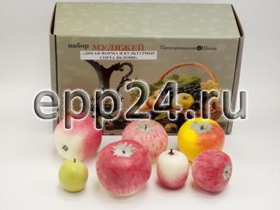 Набор муляжей Дикая форма и культурные сорта яблок