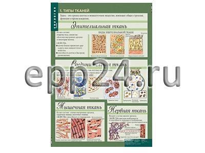 Комплект таблиц Биология 10-11 классы. Цитология. Генетика. Селекция (12 шт.)