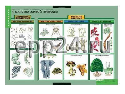 Комплект таблиц Общее знакомство с цветковыми растениями (6 шт.)