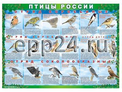 Комплект таблиц Птицы России