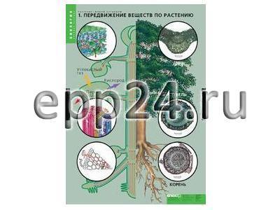 Комплект таблиц Растения - живой организм (4 шт.)