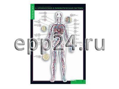 Комплект таблиц Строение тела человека (10 шт.+ 80 карточек)