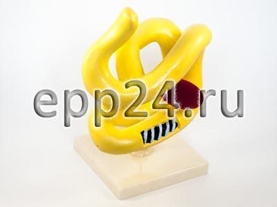 2.15.122 Модель молекулы белка