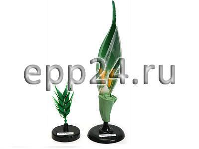 2.16.55 Комплект ботанических моделей демонстрационный