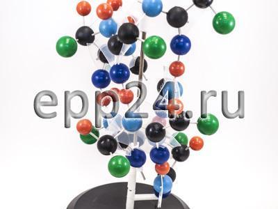 2.17.56 Модель структуры белка