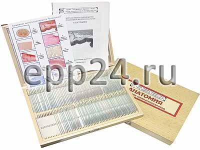 2.23.101 Комплект микропрепаратов по анатомии (углубленный уровень)